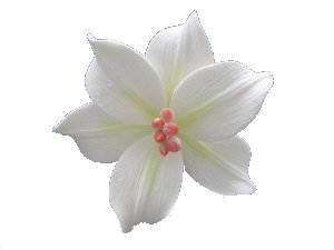 Lily, White with Light Green 4 inch