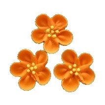 Wild Rose, Orange 12 pcs