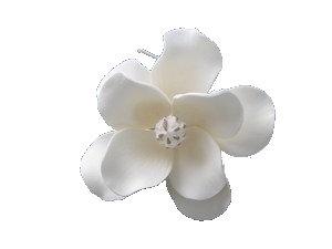 Magnolia Grande, White with shaded Peach 4 inch