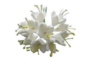 Daphne, White 0.75 inch 15 pcs