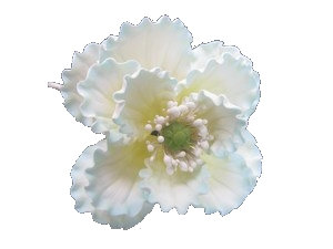 Summer Poppy, White with shaded Light Blue 4 inch