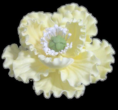 Summer Poppy, Light Yellow 4 inch