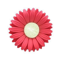 Gerbera Daisy, Red 2.5 inch
