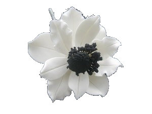 Anemone Wind Flower, White w/Black 3 inch, per piece
