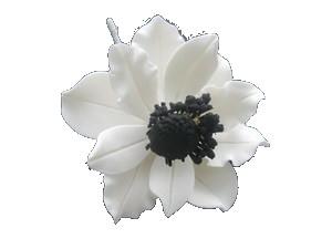 Anemone Wind Flower White Wblack 3 Inch