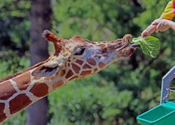 Maryland Zoo, August 15, 2014
