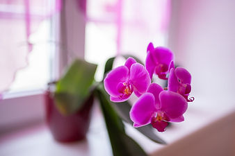 Orchidée 01.jpg