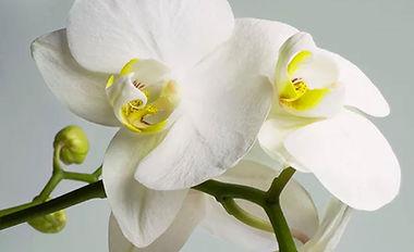 orchid%202_edited.jpg