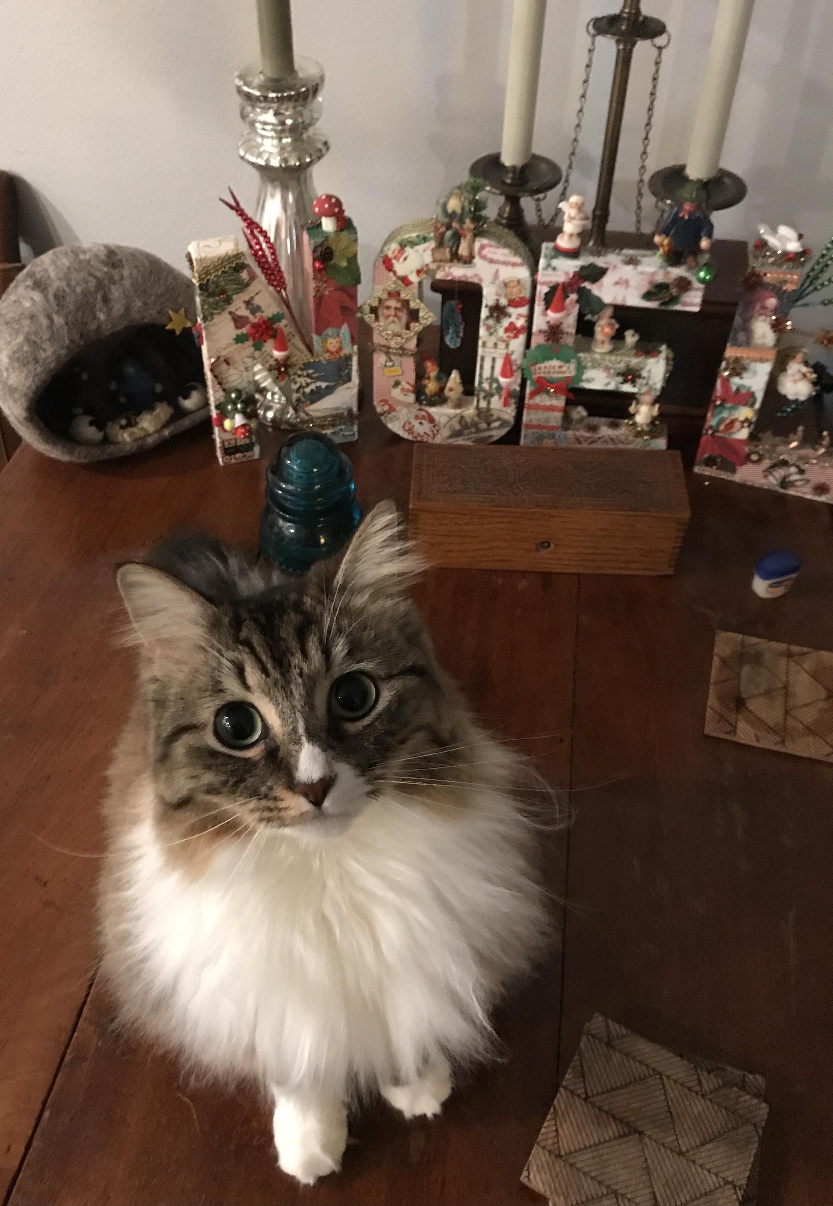 Noelle vs Noel