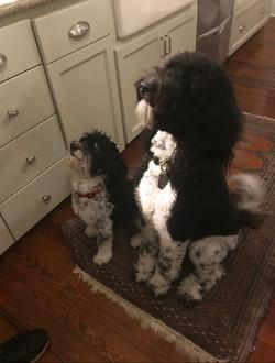 Pair of Doggies