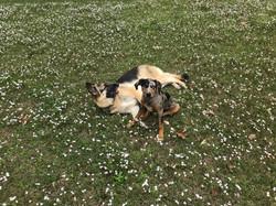 Doggie Field Trip