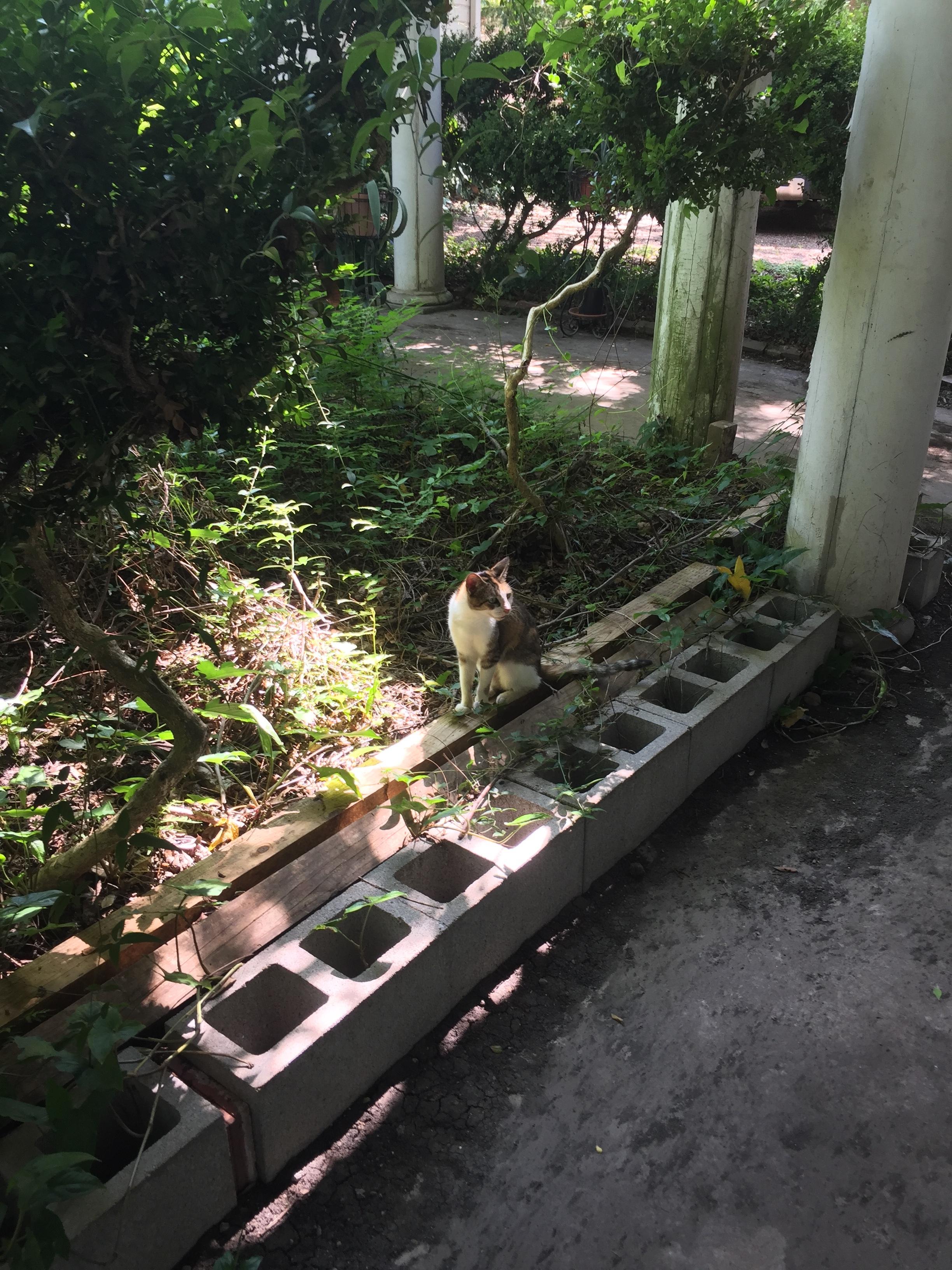 Cuteness Cat
