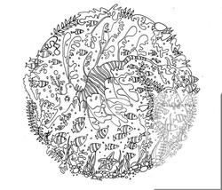 leafy seadragon and fish