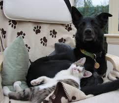 BBD looking after kitten Haggis