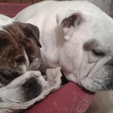 Bulle & Bacchus