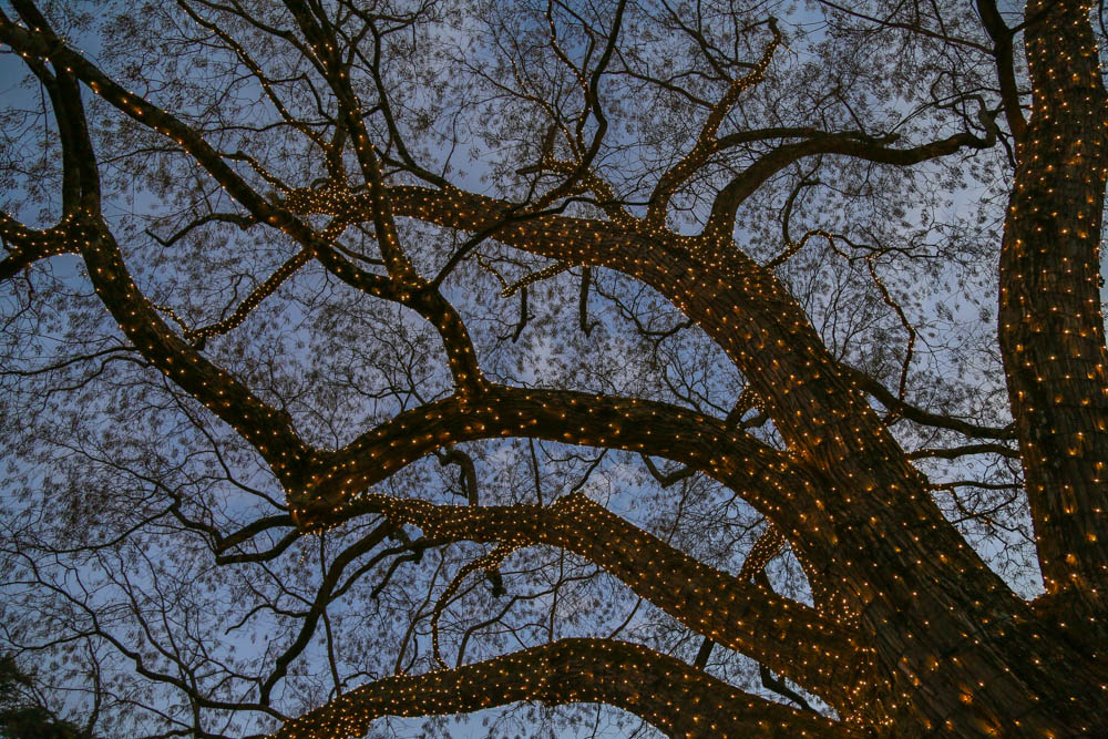 5L5A6190Kendall-wren taylor park
