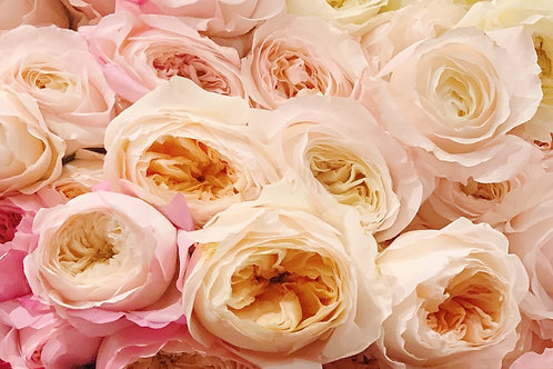 Dozen David Austin Garden Roses
