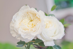 Aspen Florist Bud Vase