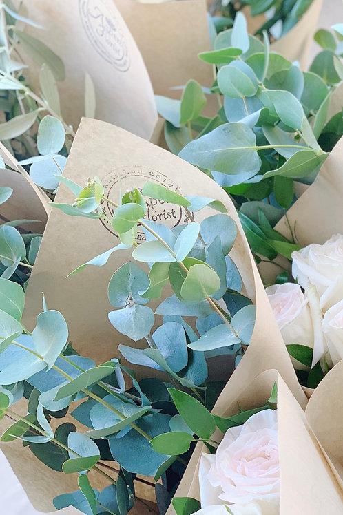 Fresh Cinerea Eucalyptus