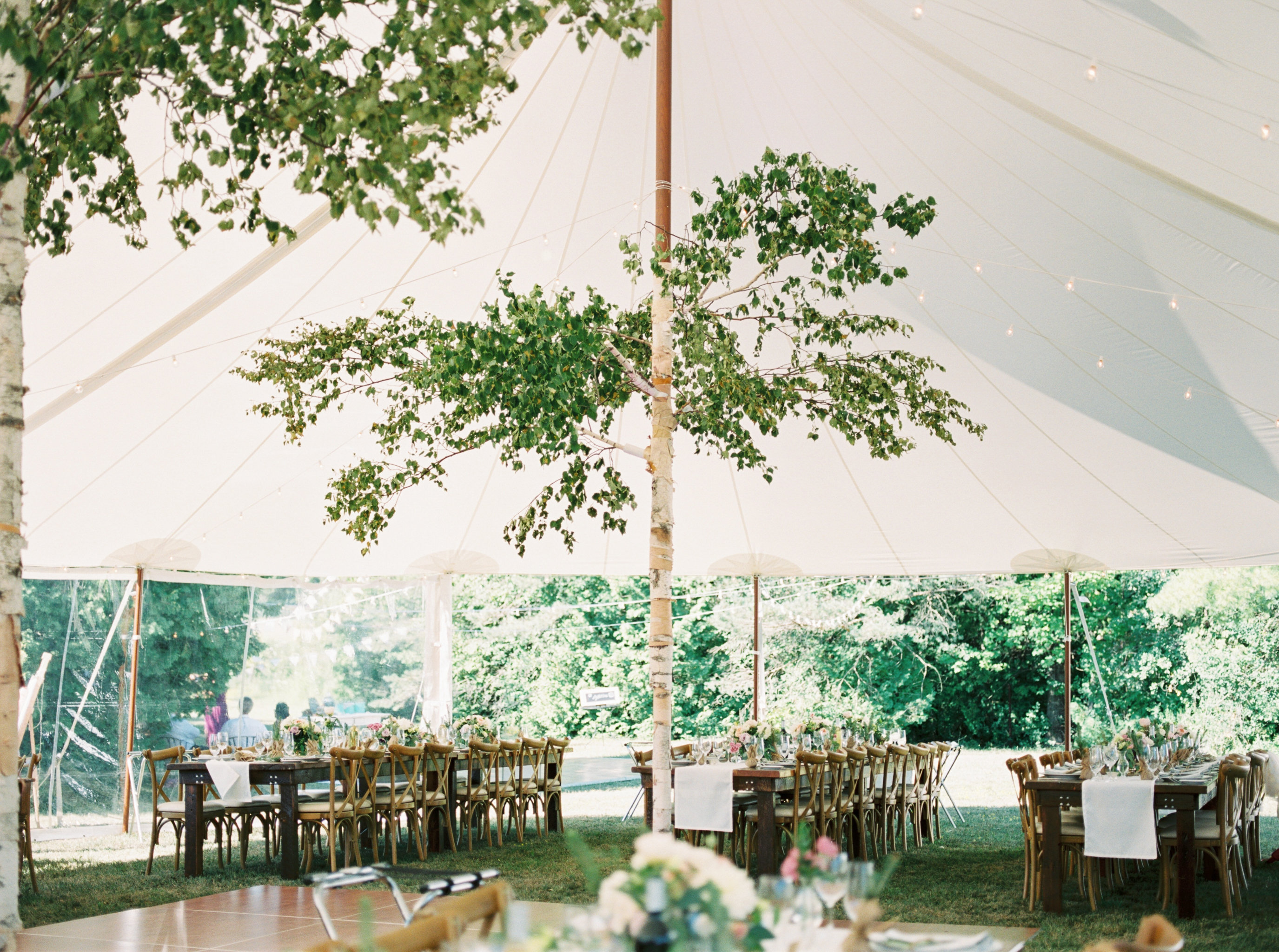 Aspen Florist Birch Pole Tent Trees