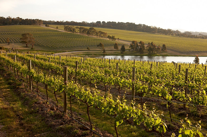 Yabby-Lake-Vineyard-Lake.jpg