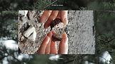Araucaria Project.00_34_57_21.Still028.jpg