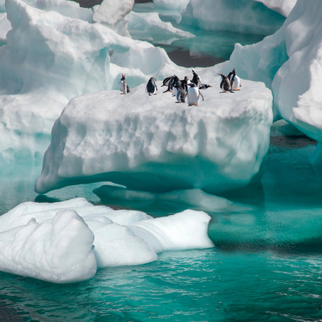 Chile will host the largest Antarctic science meeting