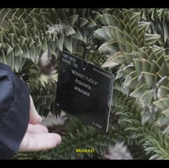 Screenshoot 1 video araucaria.png