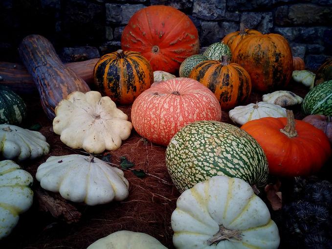 pumpkins-1114497.jpg