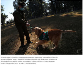 Don't sweat it: Chilean dogs sniff out coronavirus in early stages