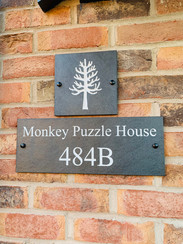 'Monke Puzzle House'. From our friend Jason Manlove who sent us a photo of his Araucaria in Staffordshire, DE159RP
