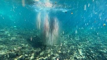 Araucaria Project Still _Agua_ Fiorella Angelini.jpg