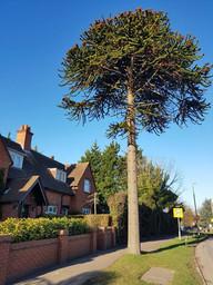 Woodmansterne Lane, Wallington, Surrey, M. Volpin