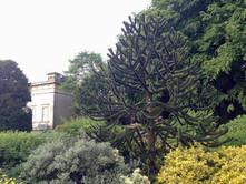 York Museum Garden. Museum St, York, YO1 7FR. Monserrat Arenas