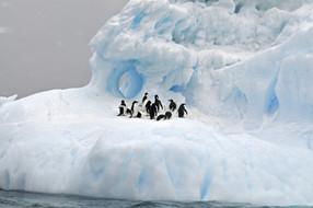 Discover Chilean Antarctic