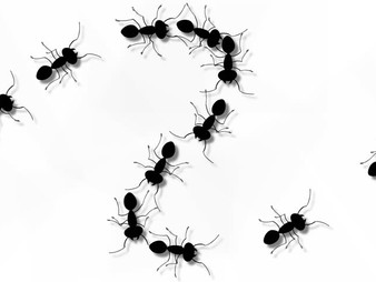 我有「螞蟻」般的影響力