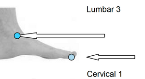 CERVICAL-1-LUMBAR-3-REFLEXOLOGY-MAP-PRESSURE-POINT