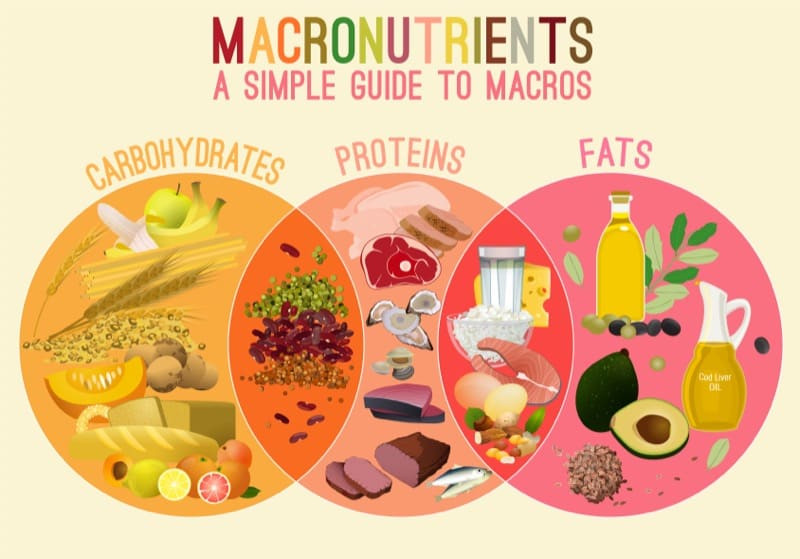 MACRONUTRIENTS - how to eat healthy and boost immunity for Coronavirus