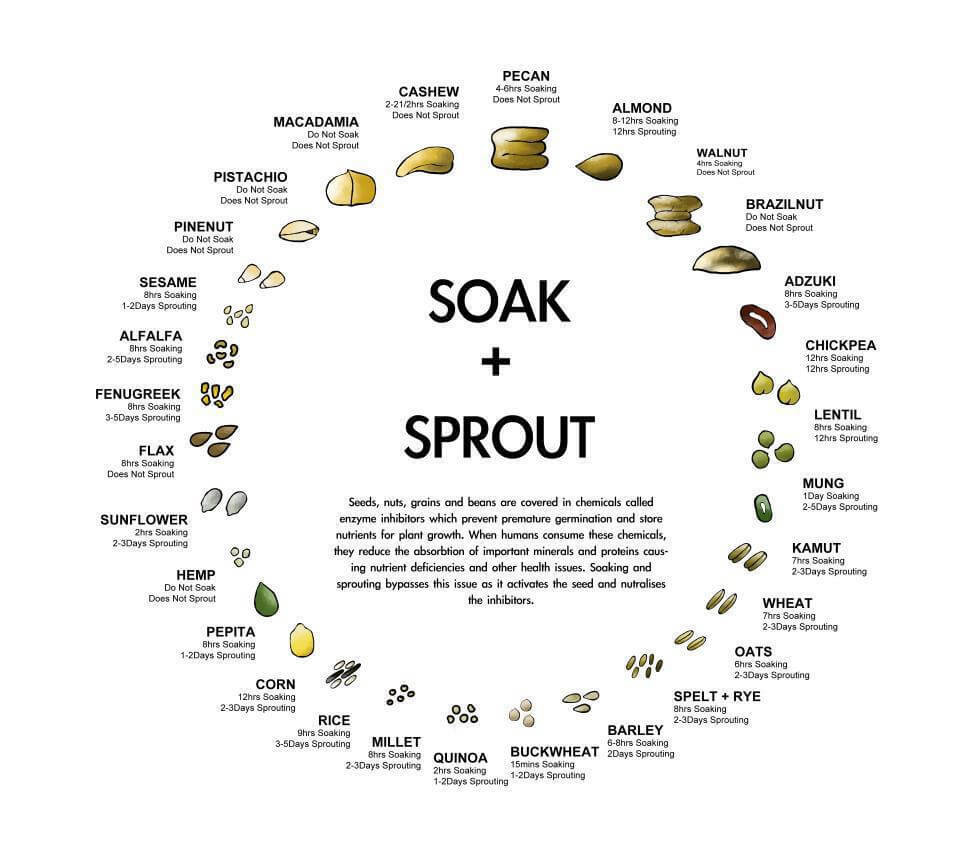 HOW TO SPROUT LEGUMES - how to eat healthy and boost immunity for Coronavirus