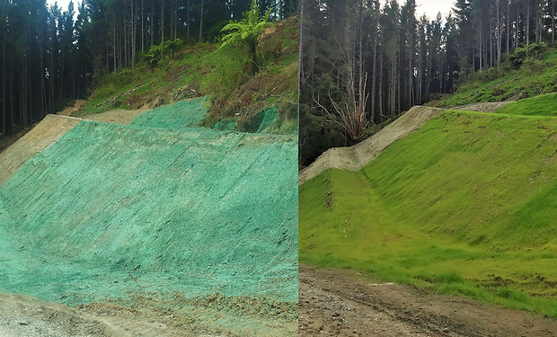 Before and after Tolaga Bay project.PNG
