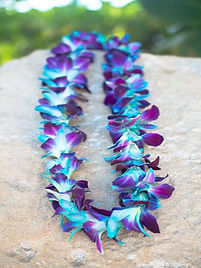 Dyed-Blue-Orchid-Single-Lei_f2e41689-b23