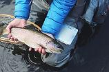 Frisch gefangene Fische
