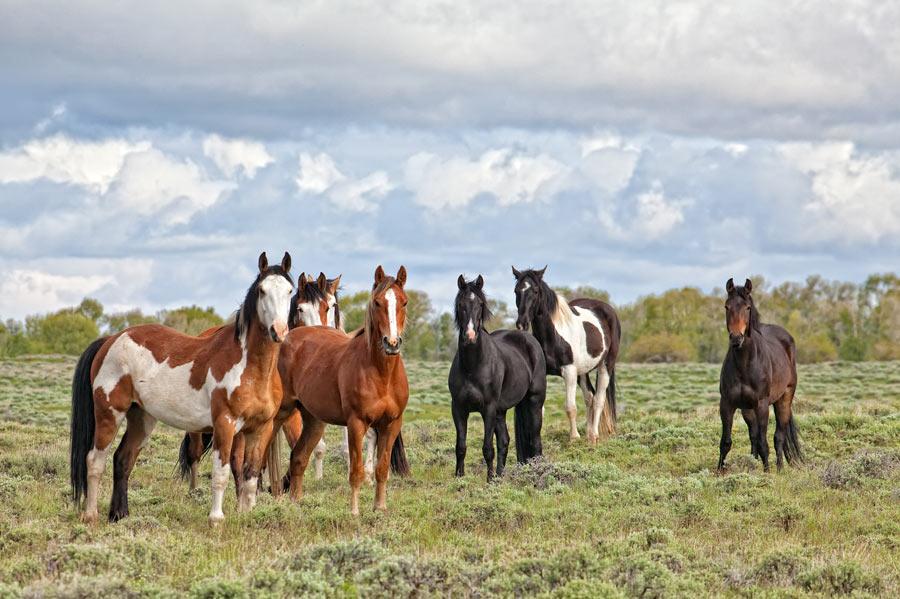 Brush Creek Equestrian Center