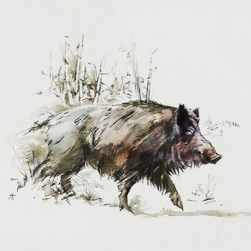 earth pig running