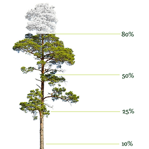 Tree 100_.png