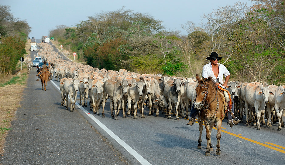 Pantanal Cattle Road