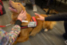 Therapy Dog Vancouver