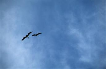 LDGSeagulls.jpg