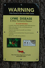Lyme .JPG