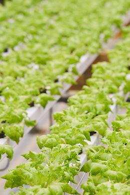 plants-growing-in-greenhouse-46PVKZX_edi
